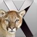 Mac OSX Animal History